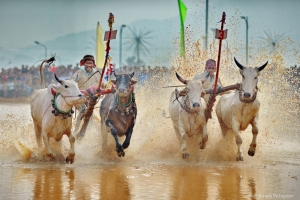 Bay Nui Ox Race Festival 2015 in An Giang