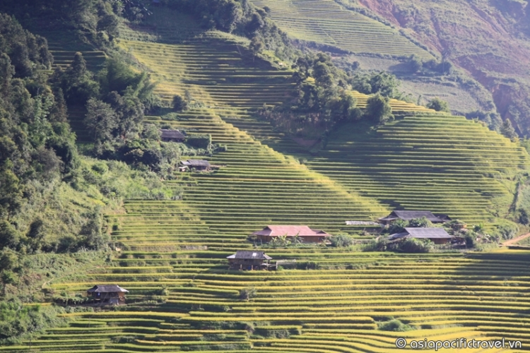 Autumn comes in Mu Cang Chai