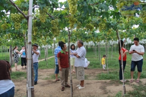 Visit Ba Moi's vineyard in Ninh Thuan