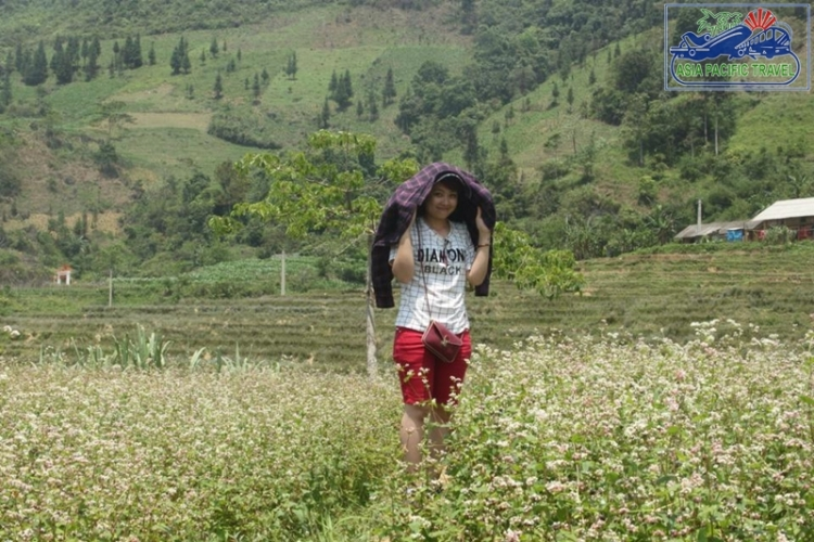 The first buckwheat flower festival to be held in Ha Giang